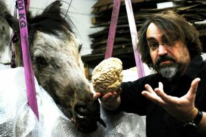 Jürgen Hirn Pferd